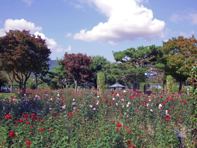 서울대공원 테마가든에서 가을장미와 낭만을 즐기세요