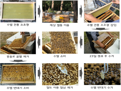 '수벌 번데기' 새로운 식품원료로 인정